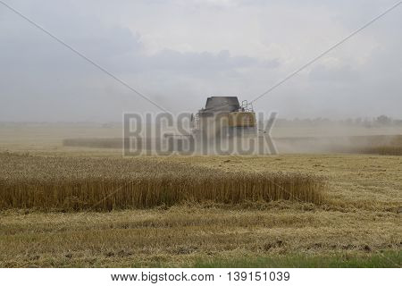 Kombain Collects On The Wheat Crop. Agricultural Machinery In The Field.