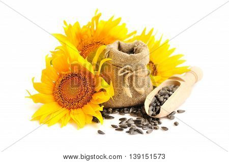 Yellow Sunflowers With Wooden Spoon And A Small Bag Of Seeds On A White Background