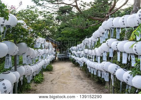Pathway Among The White Lantern