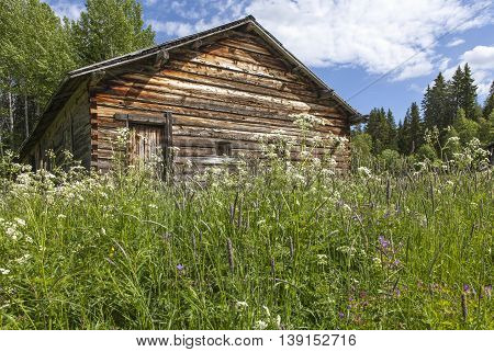 Wooden barn, timber building beyond wildflowers in bright sunshine.