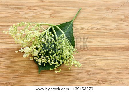 Sambucus nigra elderberry herb with flowers buds and leaves on wooden background. Sequence of maturation.