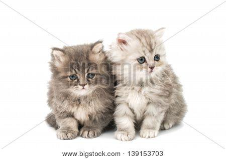 little fluffy kittens on a white background