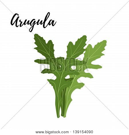 Isolated branches of herbs fresh arugula aroma herbs vector object on white background. Kitchen seasoning spices.Vektor illustration.