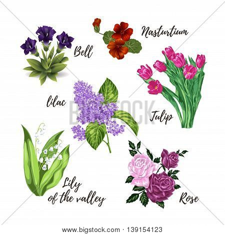 Collection of isolated different flowers: tulips roses lily of the valley lilac nasturtium bells. Vector illustration.