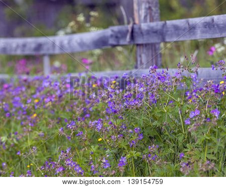 Wooden fence, wildflowers, cranesbill on a slope.