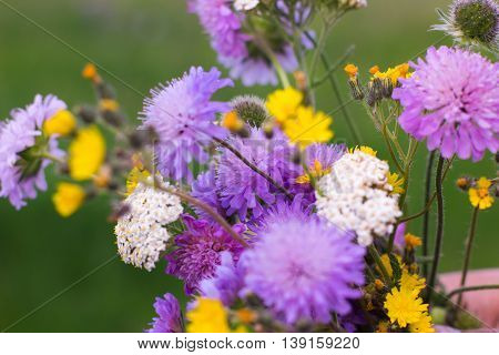 Colorful bouquet on wild flowers on green background. Bunch of field blossom in meadow