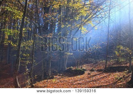 Fairy-tale forest inspirs autumn colors and scents.