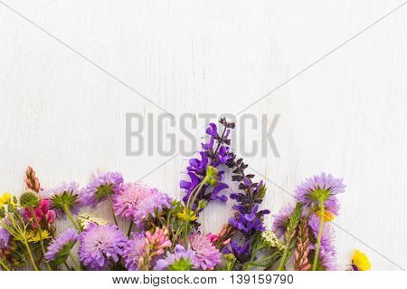 Colorful field flowers on white background, copyspace. Variety of wildflowers on light backdrop with free space for advertisement or text