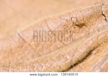 The small spider on the dry leaf