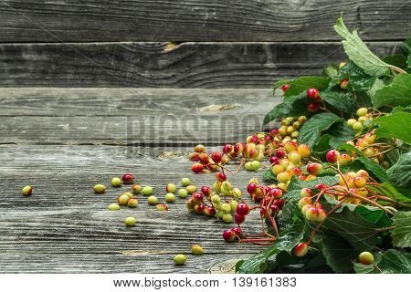 Berries On A Beautiful Wooden Background, Winter, Autumn
