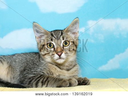 gray brown and white tabby kitten 8 weeks old laying on a yellow blanket looking forward at viewer. Hopeful waiting. Copy space