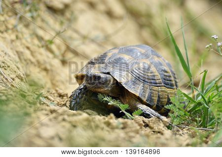 turtle in the grass in summer
