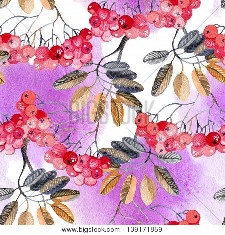 Watercolor rowan berry background. Hand painted illustration