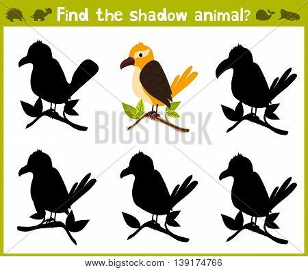 Educational game for children of kindergarten and school age on the development of logic. Tropical bird. Vector illustration