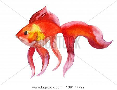 Gold fish isolated on white background - raster watercolor illustration