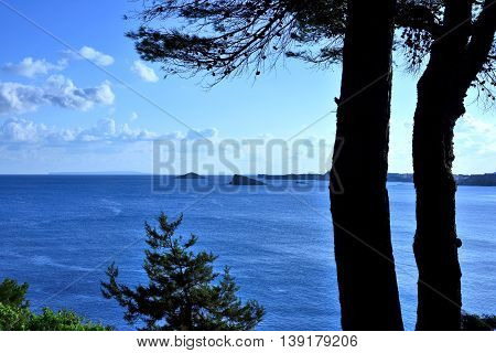 Mediterranean vegetation and view to the deep blue sea.