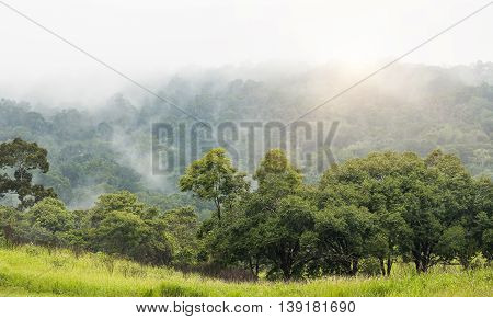 Green tree and grass with far background of big mountain blurred by flying fog after raining and sunrise.