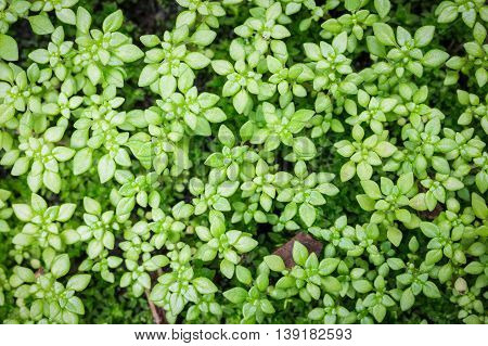 Background of close focusing on small green tree which growing on wet floor.