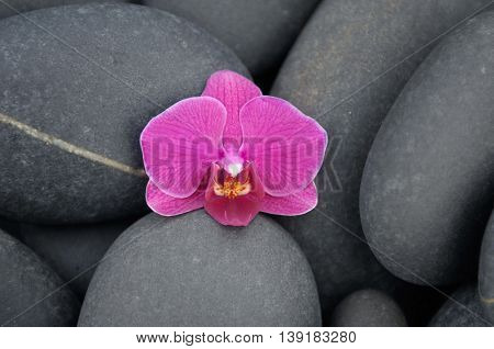 orchid on pebbles background