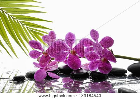 Lying down orchid and wet black stones with green leaf