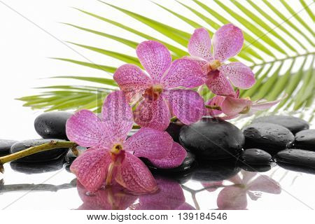 Set of orchid and wet black stones with palm