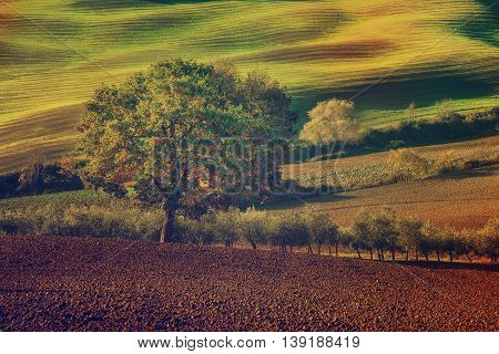 Tuscan fields and  trees in a beautiful valley, natural outdoor landscape retro vintage hipster background