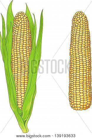 Realistic Vector Corn
