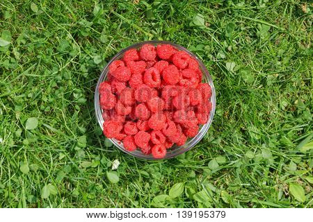 Top view of a bowl of freshly harvested raspberries on a grass in a summer garden