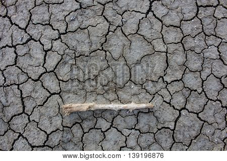 The Dry cracked ground surface for background.
