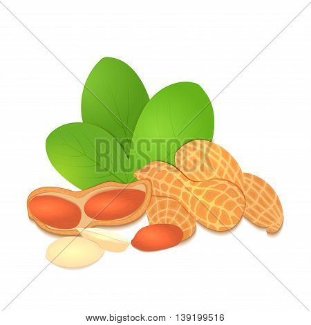 Vector illustration peanut nut. A handful of shelled peanuts nuts in shell and shelled, leaves. Tasty Image on white background nuts for printing on packaging, advertising of healthy foods