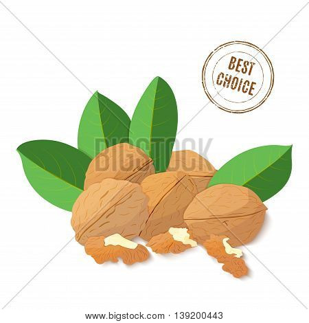 Vector illustration Walnut nut. A handful of shelled Walnuts nuts in shell and shelled, leaves. Tasty Image on white background nuts for printing on packaging, advertising of healthy foods
