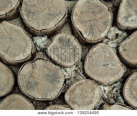 Pine Tree Log.