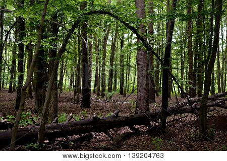 An old fallen tree in the forest