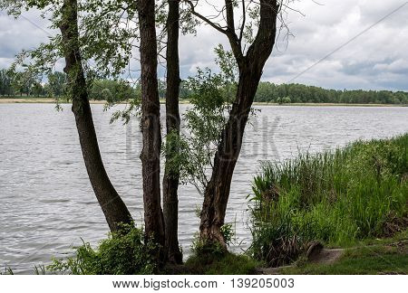 Four trees on the shore near the water