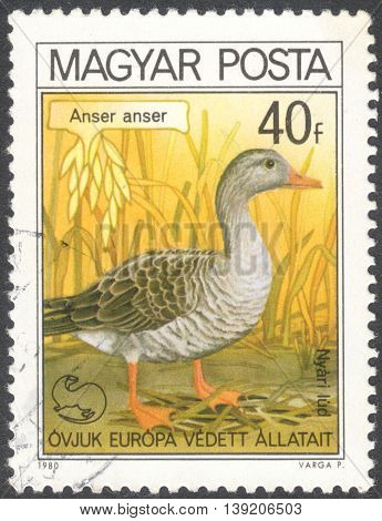 MOSCOW RUSSIA - CIRCA JANUARY 2016: a post stamp printed in HUNGARY shows a bird with the inscription