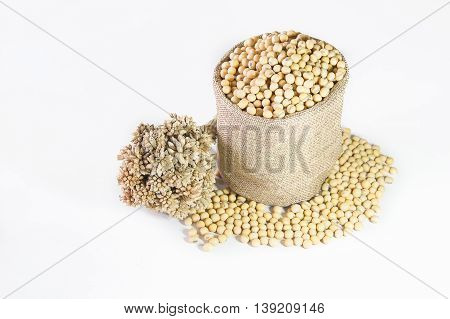 Soy bean in small hemp bag with flowers isolated
