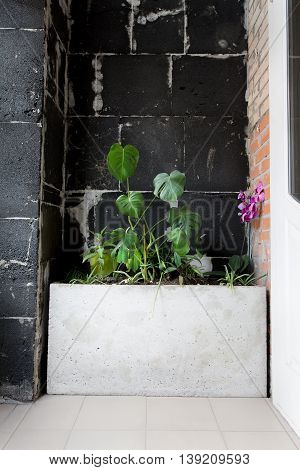 Black wall decoration of plants in building: cafe, restaurat, office. Flowers in vase for wall decoration.