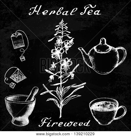 Willow herb, Chamerion, fireweed hand drawn sketch botanical illustration. Vector drawing. Lettering. Herbal tea elements - cup, teapot, kettle, tea bag, bag, mortar and pestle. Effect chalk board