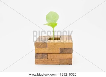 A green sapling in small wood block