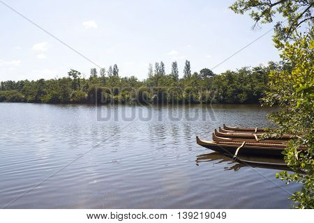 Outriggers Canoes In A Lake In Summer Near A Wood