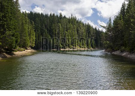 Lake With Pine Trees. Windy