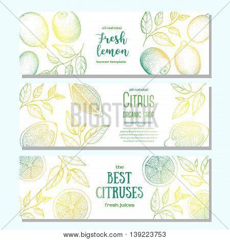 Citrus horizontal banner collection. Lemons hand drawn in ink illustration. Vector vintage fresh illustration. Line art graphic.