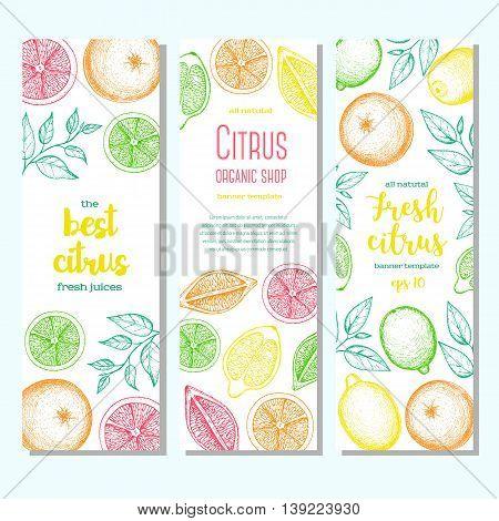 Citrus vertical banner collection. Lemons and orange hand drawn in ink illustration. Vector vintage fresh illustration. Line art graphic.