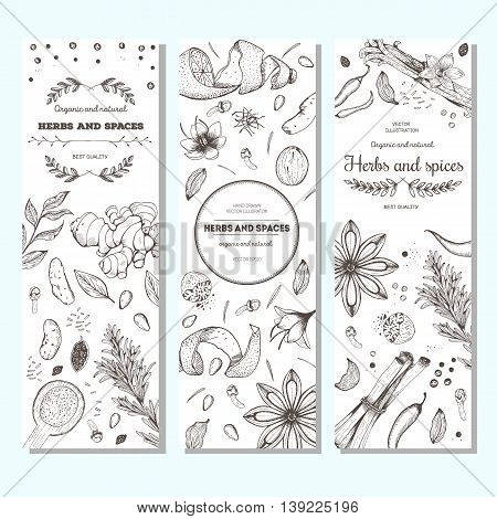 Herbs and spices vintage design template. Vertical banners set. Vector illustration hand drawn linear art.