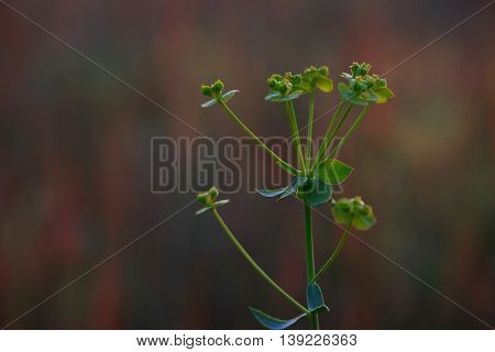 Beautiful meadow flower on blurred background