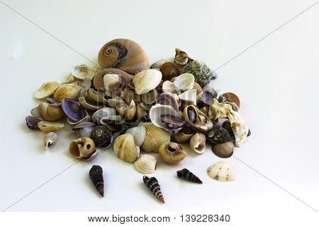 Still Life shot of Sea Shells from the beach