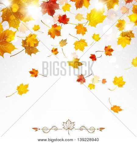 autumn falling maple leaves on a light background