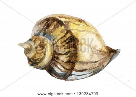watercolor hand painted sea shell isolated on white background. Raster illustration