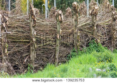 Nice Panorama homemade natural fence of wicker