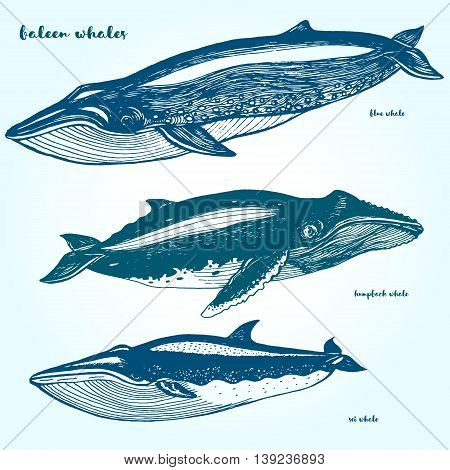 Set whales. Drawn in ink hand-drawing. Collection of different whales.